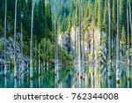 the sunken forest of  lake... | Shutterstock . vector #762344008