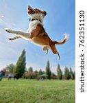 an australian shepherd collie... | Shutterstock . vector #762351130