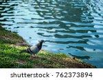 a small bird is walking along...   Shutterstock . vector #762373894