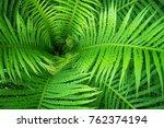 tropical fern close up  ... | Shutterstock . vector #762374194