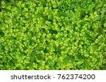 decorative background of green... | Shutterstock . vector #762374200