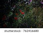 red poppy flowers | Shutterstock . vector #762416680