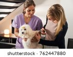 Stock photo young hispanic woman working as veterinary vet teaching dog owner how to use nail clipper to clip 762447880