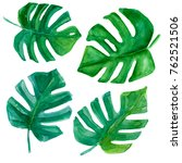 set of tropical leaves.  hand... | Shutterstock . vector #762521506