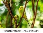 beautiful budgerigar bird... | Shutterstock . vector #762546034