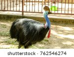 the cassowary bird | Shutterstock . vector #762546274