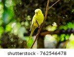 beautiful budgerigar bird... | Shutterstock . vector #762546478