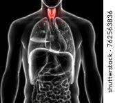 3d illustration of human body... | Shutterstock . vector #762563836