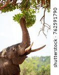 african elephant with its trunk ... | Shutterstock . vector #762591790