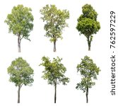 Isolated Trees White Background Collection - Fine Art prints