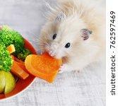 A Fluffy Hamster Eats...