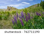 lupin flower in the valley | Shutterstock . vector #762711190