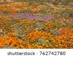 brightly colored wild flowers ... | Shutterstock . vector #762742780