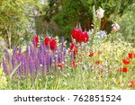 beautiful lilac and red flowers ... | Shutterstock . vector #762851524