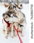 sledding with husky dogs in... | Shutterstock . vector #762883750