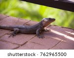 brown canarian lizard on red... | Shutterstock . vector #762965500
