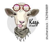 vector sheep with glasses. hand ... | Shutterstock .eps vector #762984889