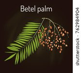 betel palm  areca catechu   or... | Shutterstock .eps vector #762984904