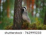 mammal in environment  rainy... | Shutterstock . vector #762995233