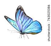 beautiful blue butterfly ...   Shutterstock . vector #763025386