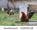 Rooster Sitting On His House...