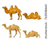 collection of vector camels... | Shutterstock .eps vector #763038664