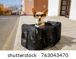Stock photo chihuahua dog in transport bag or box ready to travel as pet in cabin in plane or airplane 763043470