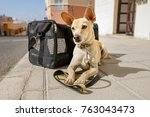 chihuahua  dog in transport bag ... | Shutterstock . vector #763043473