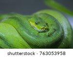 snake in the zoo | Shutterstock . vector #763053958