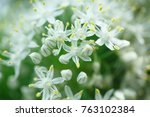 nature background close up | Shutterstock . vector #763102384