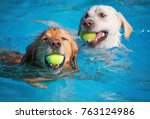 a dog having a fun at a local... | Shutterstock . vector #763124986