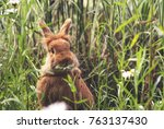 a cute rabbit eating a daisy at ... | Shutterstock . vector #763137430