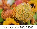 pincushion flower  4 | Shutterstock . vector #763185508