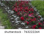 flowerbed with red and green... | Shutterstock . vector #763222264