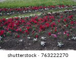 flowerbed with red and green... | Shutterstock . vector #763222270