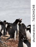 Small photo of Adelie penguin with chick - Brown Bluff colony