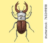 crying beetle with horns  | Shutterstock .eps vector #763249858