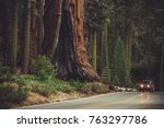 Giant Sequoia and the Generals Highway. Sequoia National Park and Forest. Kings Canyon. California, United States of America. - stock photo