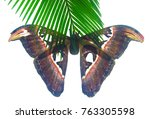 beautiful big butterfly  giant... | Shutterstock . vector #763305598
