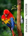 Colorful Portrait Of Amazon Re...
