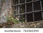 Wild Flowers Growing In A...