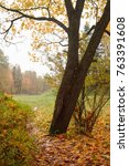 autumn tree in a park in... | Shutterstock . vector #763391608