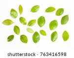 green leaf on a white... | Shutterstock . vector #763416598