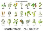collection of best herbs for... | Shutterstock .eps vector #763430419