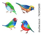 set of exotic little colorful... | Shutterstock . vector #763432600