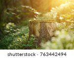 north scandinavian pine forest  ... | Shutterstock . vector #763442494