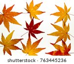 background of beautiful maple... | Shutterstock . vector #763445236