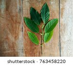 green young leaves of mitragyna ...   Shutterstock . vector #763458220