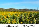 landscape sunflowers field with ... | Shutterstock . vector #763463968