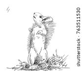 sketch of squirrel standing on... | Shutterstock .eps vector #763511530